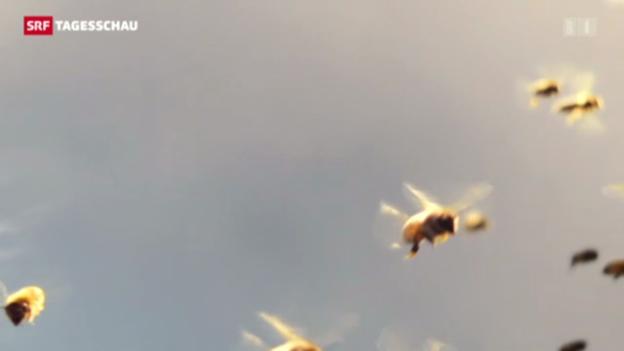 Video «Bienenfilm gewinnt Schweizer Filmpreis» abspielen