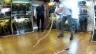 Video «Faszination Giftschlangen» abspielen