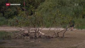 Video «Drohendes Fischsterben im Rhein» abspielen
