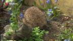 Video «Der Frühling kommt immer früher» abspielen
