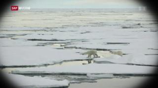 Video «FOKUS: Weltweite Nachhaltigkeit» abspielen