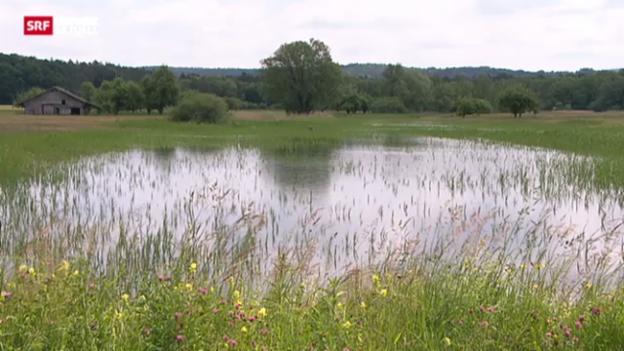 Video «Mückenplage nach Hochwasser» abspielen
