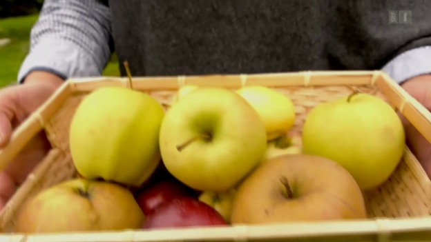 Video «Apfelallergie» abspielen