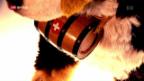 Video «FOKUS: Wo Swissness nicht mehr zieht» abspielen