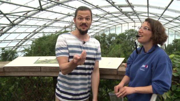 Video «Die Bienenfresser (7)» abspielen