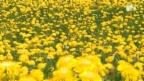 Video «Artenvielfalt trotz Landwirtschaft» abspielen