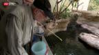 Video «Der Krokodiltrainer zu Besuch» abspielen
