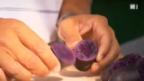 Video «Kartoffel «Blauer St. Galler»» abspielen