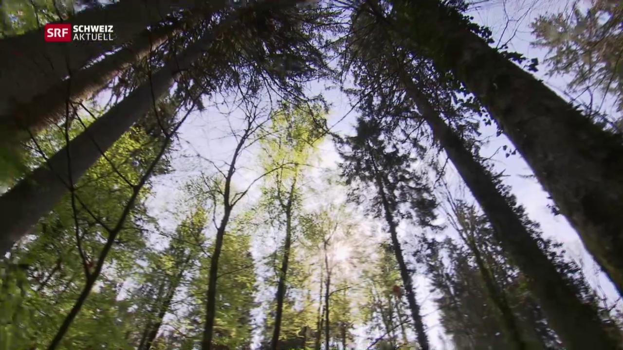 Im Wald ist weniger mehr