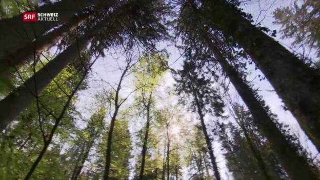 Video «Im Wald ist weniger mehr» abspielen