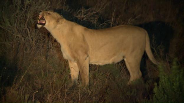 Video «Pätagei in Südafrika – Nachtsafari» abspielen