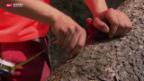 Video «Mangel an Forst-Facharbeitern» abspielen