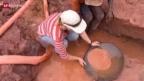 Video «Schatzsuche im Regenwald» abspielen