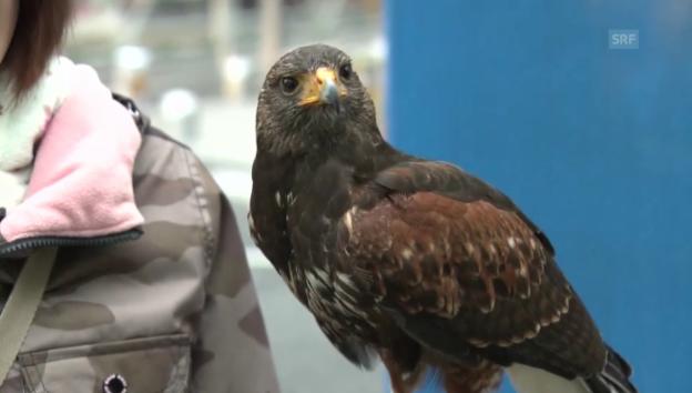 Video «Mit Vogel gegen Vögel» abspielen