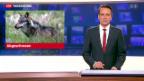 Video «Wolf im Obergoms erlegt» abspielen