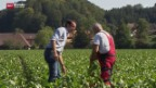 Video «Krisenstimmung bei den Zuckerrübenpflanzern» abspielen