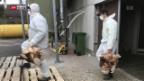 Video «Geflügelseuche im Thurgau» abspielen
