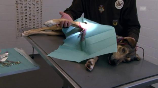 Video «Von Menschen und Tieren (1/5)» abspielen