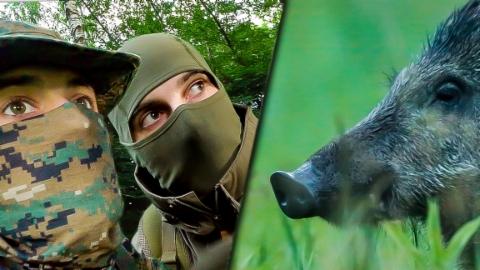 Animalis: Das Wildschwein (1/10)