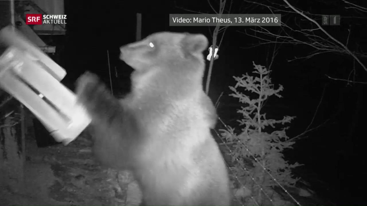 Bär beim Fressen gefilmt
