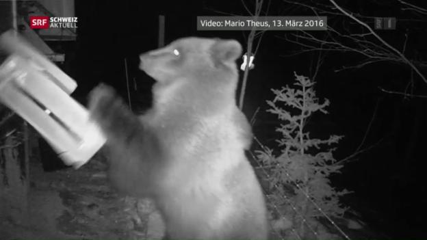 Video «Bär beim Fressen gefilmt» abspielen