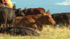 Video «Milchpreis wird nicht gesenkt» abspielen