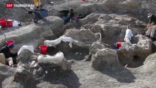 Video «Forscher finden Skelett eines 60-Tonnen-Sauriers» abspielen