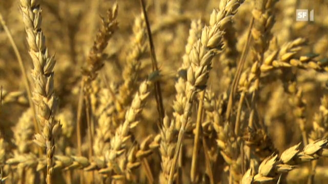 Schweizer Mehl fehlt es an Gluten