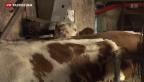 Video «Aufhebung der Milchquote in der EU» abspielen