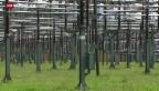 Video «Schweizer verbrauchen weniger Strom» abspielen