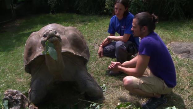 Video «Die Galapagos-Schildkröte (15)» abspielen