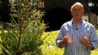 Video «alt Bundesrat Adolf Ogi wiederholt seine legendäre Neujahrsrede» abspielen