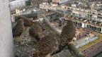 Video «Wanderfalken auf dem Hochkamin» abspielen