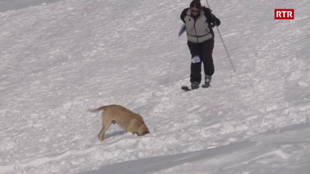 Laschar ir video «Campiunadi svizzer da sport da chauns da lavina»