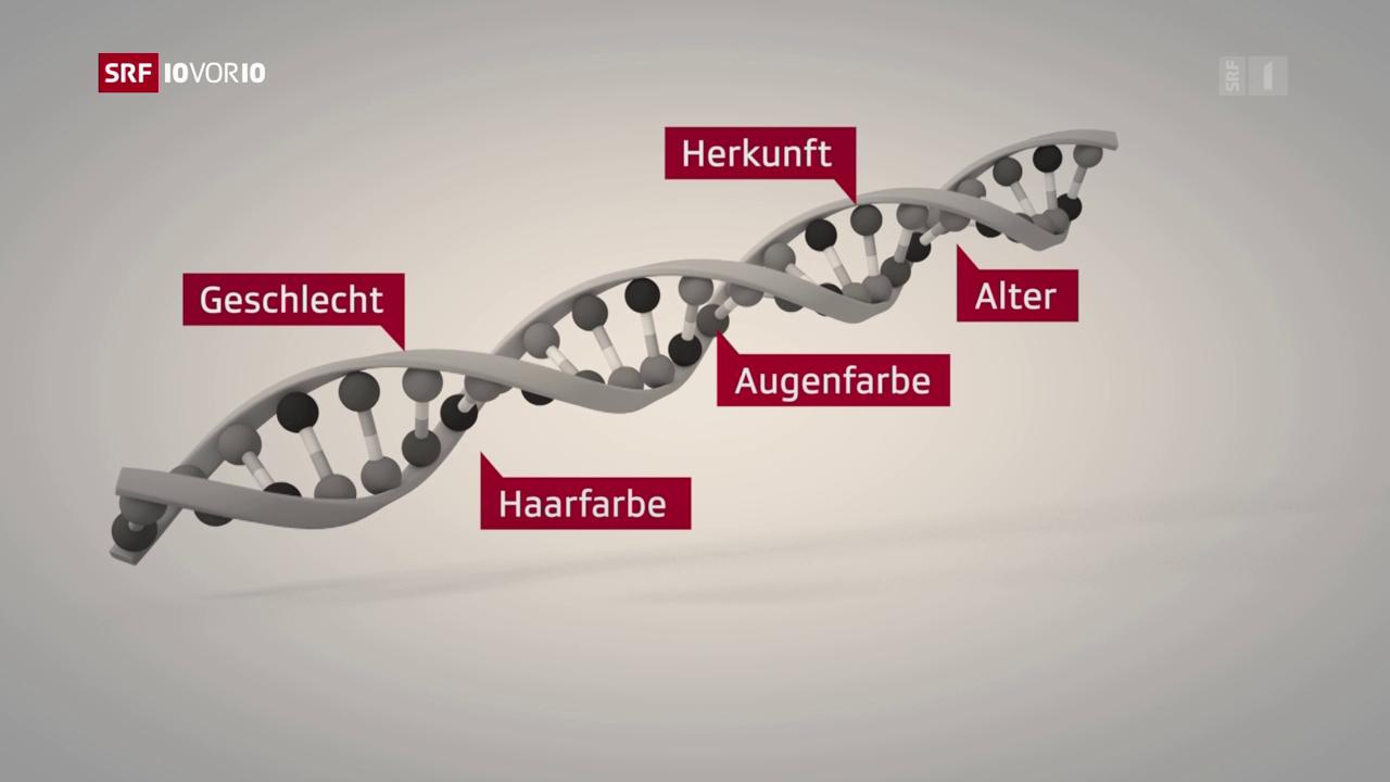 FOKUS: Wenn die DNA zum Täter führt