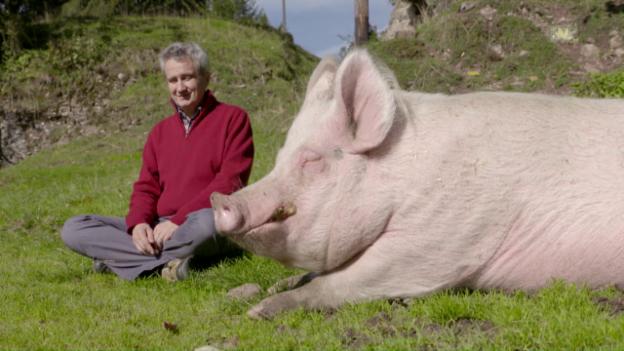 Video «MediTIERE! Tierische Meditationen» abspielen
