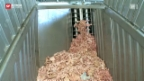 Video «Biogas-Anlage in Schwierigkeiten» abspielen