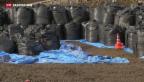 Video «Fukushima: vier Jahre danach» abspielen