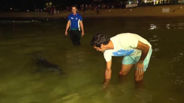Video «Tennis: Roger Federer füttert Delphine» abspielen