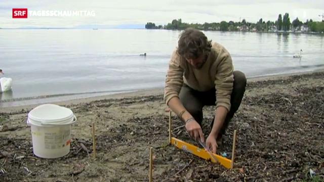 Süsswasser wird durch Plastik verschmutzt