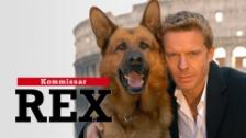Link öffnet eine Lightbox. Video Kommissar Rex vom 19.04.2018 abspielen
