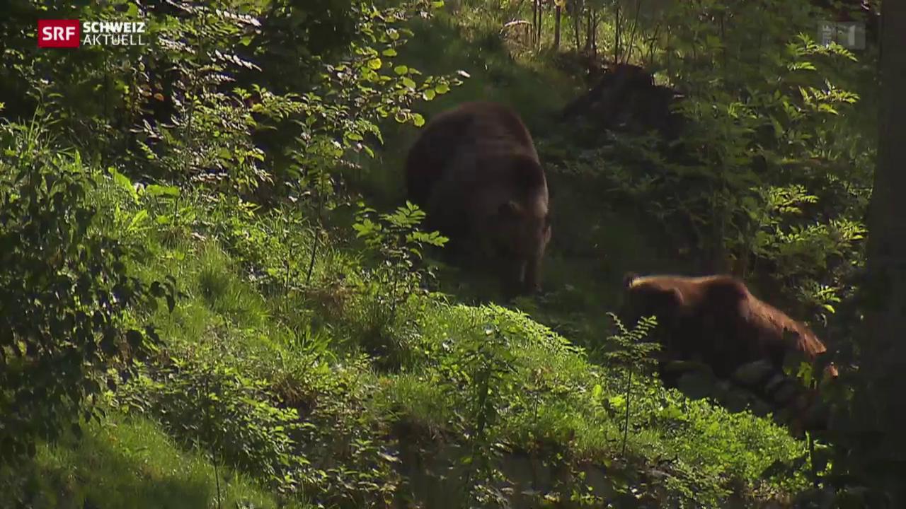 Bern hat seine Bären wieder