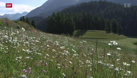 Unser Land und die Natur: Wie der Wald zurückkommt (4/4)