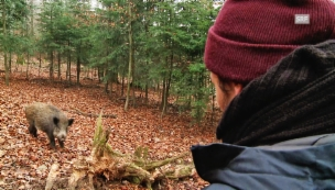 Video «Wenn das Wildschwein die Felder umgräbt» abspielen