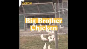 Video «Hühnerstall der Zukunft» abspielen