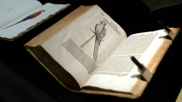 Conrad Gessners Vögel