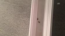 Video «Ameisenbefall im Rustico» abspielen