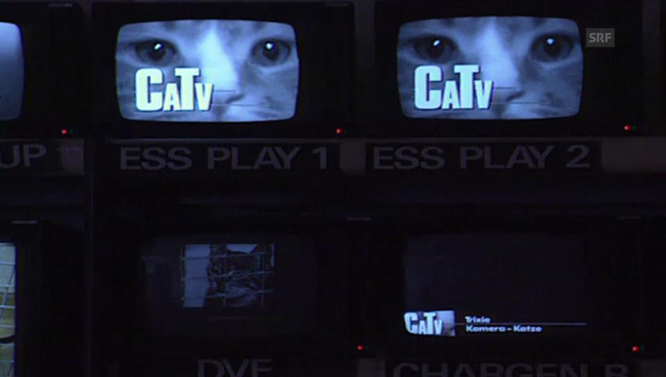 TV für Katzen (10vor10)