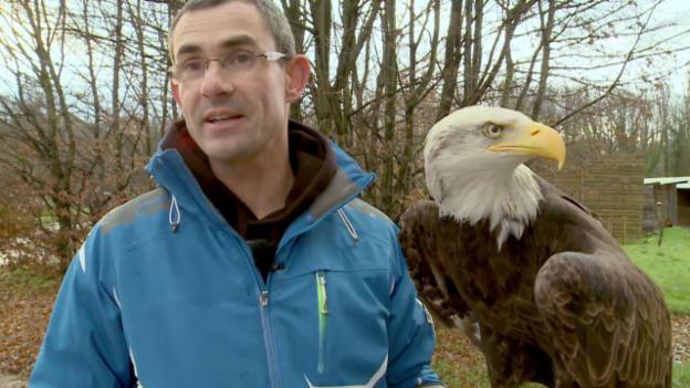 Video «Adler Sherkan im Training» abspielen
