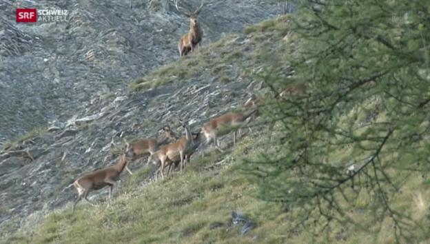 Video «100 Jahre Nationalpark» abspielen